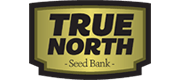 true north logo 1